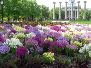 University of Missouri - Columbia