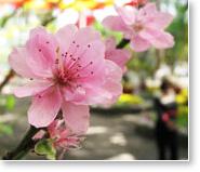 Flower-Nature